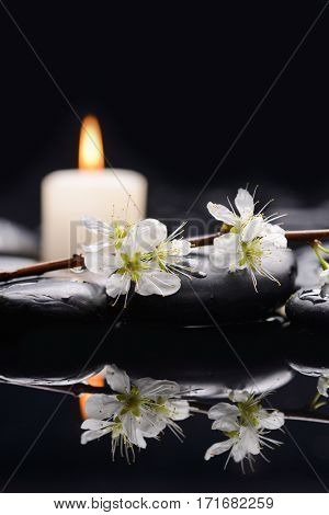 Spa concept –Cherry blossom, with candle on therapy stones