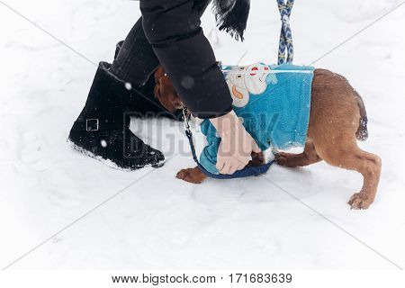 Stylish Hipster Girl Walking Out With Cute Puppy In Snowy Cold Winter Park. Moments Of True Happines