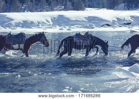 Horses Cross The Stormy Mountain River.