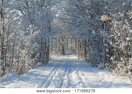 way leading through the tunnel of white trees covered with snow