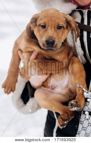 Woman Holding And Showing Cute Puppy In Snowy Cold Winter Park. Moments Of True Happiness. Adoption