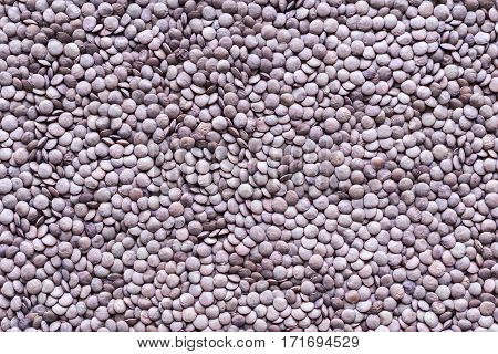 dried grains or seeds of lentil for a background and texture closeup of speckled color