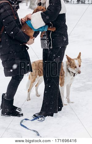 women dressing up cute doggy and big one looking in snowy cold winter park. adoption concept. save animals. space for text. sweet moment.