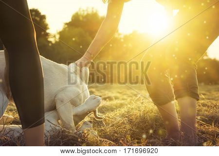 young dogs play together and a women seperates them by sunset