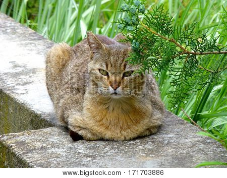 Photo of an annoyed cat resting on a concrete wall