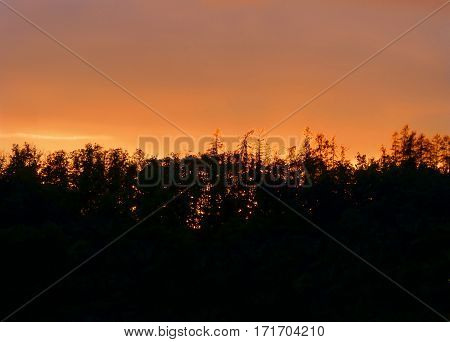 Photo of an evening sky partially covered by a silhouette of a forest