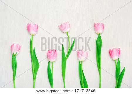 Beautiful Pink tulips flowers on white background. 8 march Mother's Day concept. Small DOF. Flat lay
