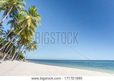 Tropical beach background from Anda beach Bohol island with coconut palms tree leafs, blue sky and turquoise sea water, Travel Vacation