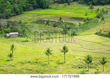 View of agricultural farm at Bohol island Philippines