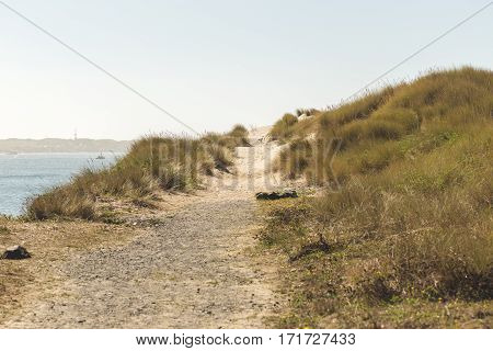 Empty dirt trail along the ocean. Sandy beach trail with grass nearby. Sunny blue sky.