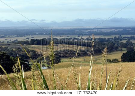 Broad panorama of the countryside in North Gippsland of Victoria. High grass in front.