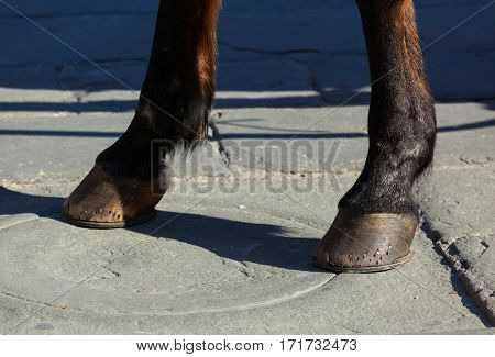 Horse Hooves On The Flagstones