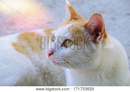 Cat behavior. White kitty cat behavior background