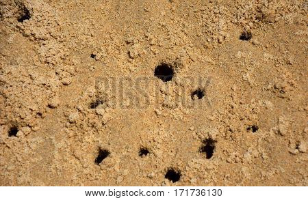 Crabs holes on beach sand - home of a Ghost crab, Sand bubbler crab. Small crab holes on the Sand. Sand worm casts on the sand beach.