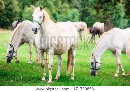 Glowing white horses under rain with one sposing and two eating grass in the background.