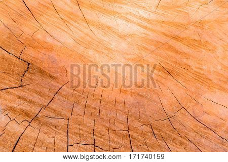 Wooden background grunge wood board from timber