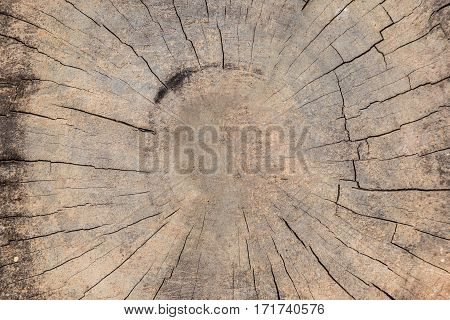 Wooden background grunge wood  from timber .