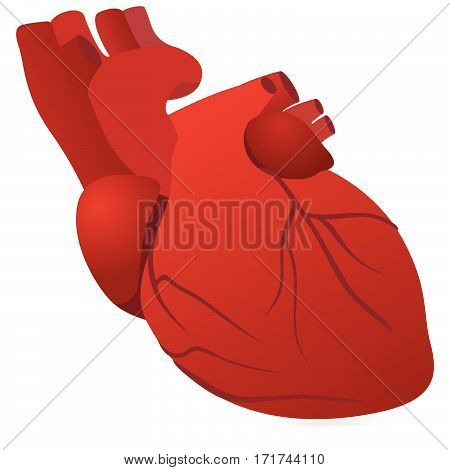 The heart of man. The illustration on a white background.