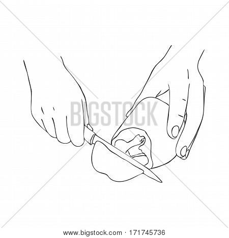 cooking hands with knife cutting sweet papper, line drawing isolated symbol at white background