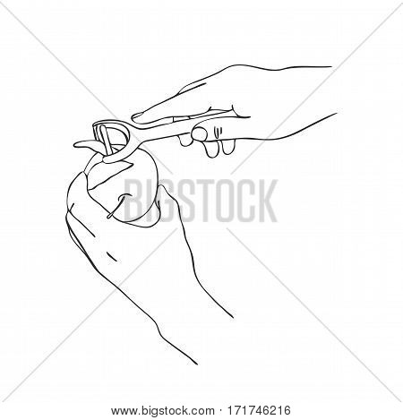 cooking hand with peel knife and apple, line drawing isolated symbol at white background