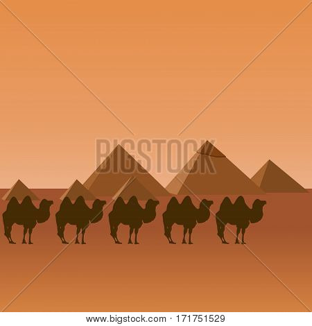 Camels on the background of the Egyptian pyramids. The illustration on a white background.
