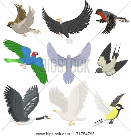 Set of different wing wild flying birds cartoon cute fauna feather flight animal silhouette. Spring freedom natural concept vector illustration. Wildlife drawing isolated pet.