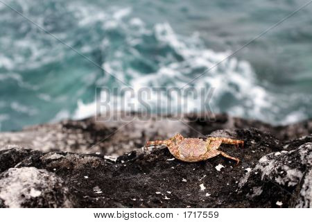 Crab On The Rocks At The Beach