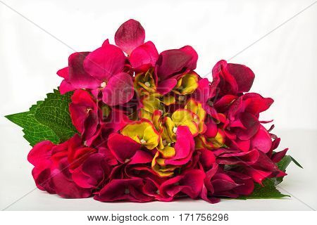 Artificial flowers on a white neutral background