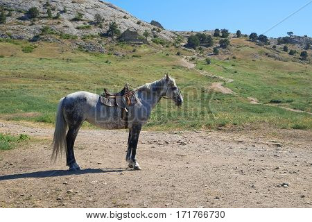 A pasture of on a mountain pasture horse. Landscape nature animal