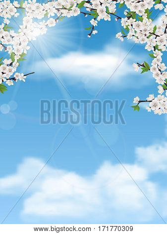Spring tree branches with leaves and flowers on sky background.  Blooming apple or cherry.