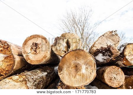 Felled trunks of trees stacked in. Stacks of sawn woods.  Industrial logging of pine trees. Nature is used by people.