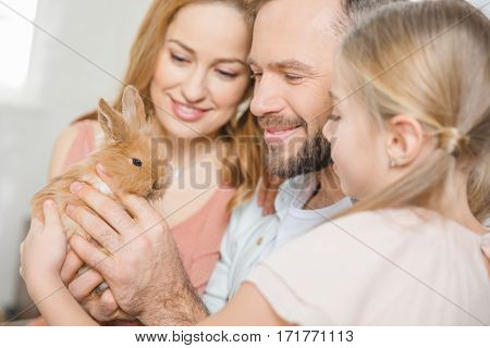 Portrait of happy family with one child playing with cute fluffy rabbit