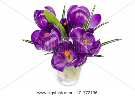 Bouquet From Crocus Flowers In Vase Isolated On White