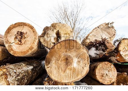 Felled trunks of trees stacked, stacks of sawn woods.  Industrial logging of pine trees. Nature is used by people.