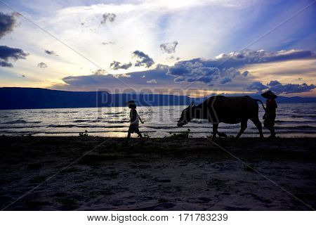 Two boys and a cow walking on a sunset beach in Indonesia.