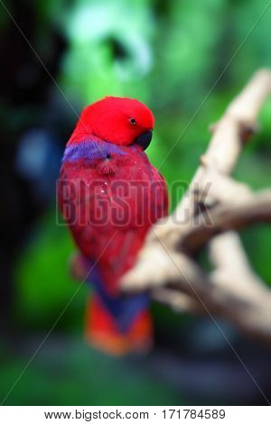 Red parrot over natural background in rainforest.
