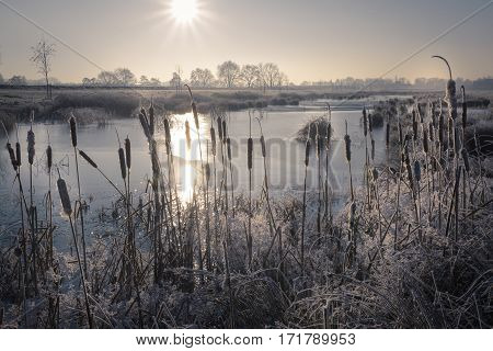 Sun warming up the frozen winter landscape with lake and reed