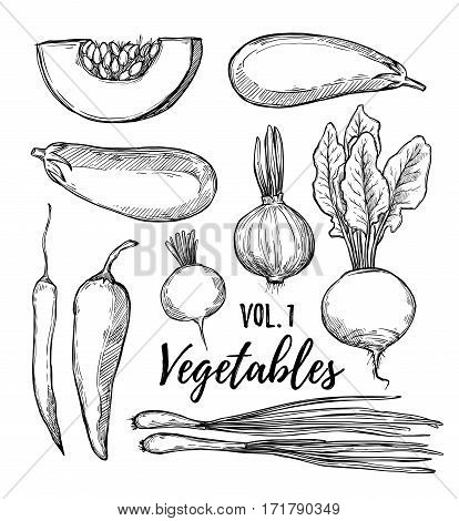 Hand Drawn Vector Illustration - Collection Of Vegetables Vol.1(pumpkin, Eggplant, Onion, Pepper, Tu