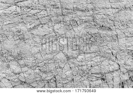 Black and white texture of sea stone texture