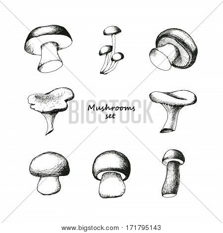 Set of eight hand drawn mushrooms. Vector black and white doodle sketchy illustration. Boletus, chanterelle, agaric and russala.