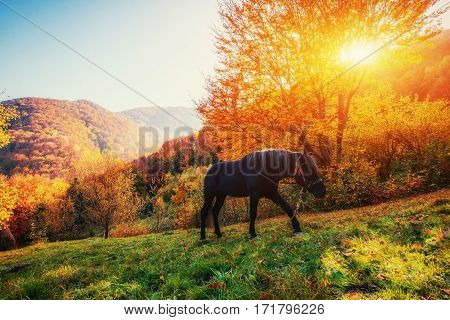 Black horse in mountains. Fantastic sunset and fog in the distance. Carpathians. Ukraine Europe