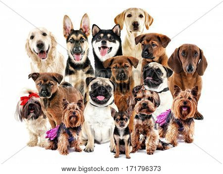 Group of cute dogs on white background