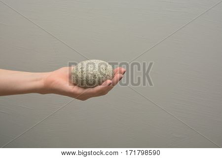 Female hand holds pebble rough stone with elliptic shape. Human palm offers natural object. Give a concrete piece.