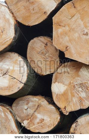 stack of beech logs in closeup on vertical picture