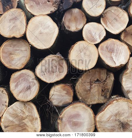 stack of beech logs in closeup on square picture