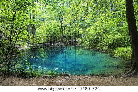 Azure pond. Natural lake in romanian forest