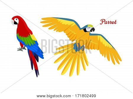 Ara parrot vector. Birds of Amazonian forests in flat design illustration. Fauna of South America. Beautiful colorful Ara parrots for icons, posters, childrens books illustrating. Isolated on white.