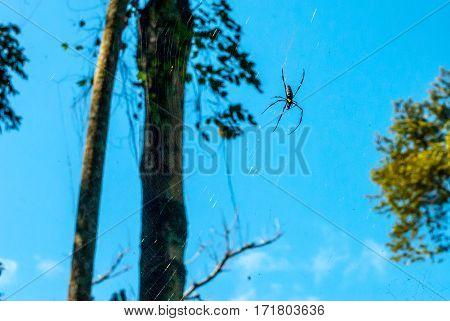 Huge spider in its web at the idyllic Kuang Si Waterfall near Luang Prabang in Laos