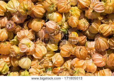 Cape Gooseberry Fruit. Fresh Cape Gooseberry Fruit Berries Of A Cape Gooseberry Fresh Fruit Sour And