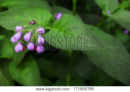 beautiful bunch of bells. lilac. bunch of flowers close-up
